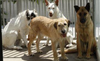 Felcan organitza una fira animalista i recaptarà diners per al nou refugi a Torrent