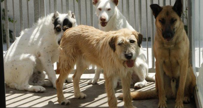 Per una adopció responsable: els animals no són joguets