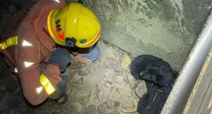 Bomberos rescatan a dos cachorros del colector de una acequia en Alginet