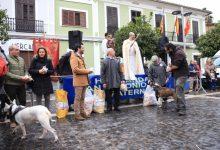 Paterna celebra la festivitat de Sant Antoni, el patró dels animals