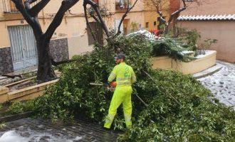 La regidoria de Medi Ambient reforça el personal per actuar sobre els danys de la neu en l'arbrat urbà d'Ontinyent