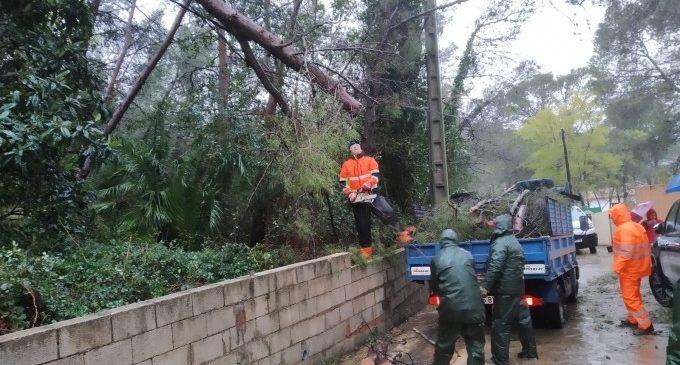 L'Ajuntament d'Alzira convoca el Consell Agrari per a valorar els efectes del temporal
