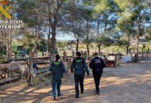 """Investiguen a l'amo d'una finca de Godelleta després de trobar 19 cavalls en """"extrema primesa"""" i altres 6 morts"""