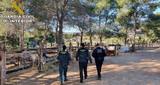 """Investigan al dueño de una finca de Godelleta tras hallar 19 caballos en """"extrema delgadez"""" y otros 6 muertos"""