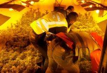 La Guardia Civil halla 500 plantas de marihuana ocultas tras un falso tabique en una nave en Sueca