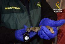 Investigado un hombre por tener 29 especies exóticas que se escapaban a casa de sus vecinos