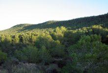 Labora obri la inscripció perquè 1.000 aturats puguen accedir a tasques de conservació de la muntanya