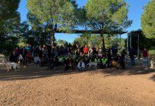 El Curso de obediencia canina de Paterna reúne a más de 70 mascotas