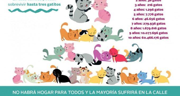 Paterna llança una campanya de sensibilització amb motiu del Dia del Gat