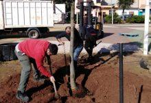 La reparació de goteres i la plantació d'arbres, accions destacades aquesta setmana del manteniment a Almussafes