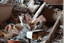 Rescaten a una buldog anglés lligada en una casa abandonada