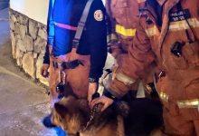 Els bombers rescaten a un gos que havia caigut a un barranc des d'una altura de deu metres