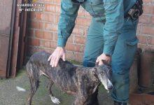 'No a la caça' demanarà a Alacant, Castelló i València una Llei de Protecció animal que vetle pels gossos de caça