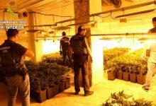 La Guàrdia Civil intervé 340 plantes de marihuana en un habitatge de Llombai per valor de 50.000€