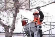 Los árboles talados por seguridad se sustituirán por vegetación más adecuada