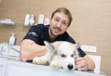 El veterinario Jorge Llinás aclara que las mascotas no transmiten el coronavirus