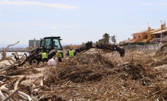 Costes comença a retirar les canyes de les platges del sud de Cullera