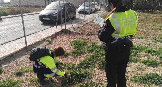 La Policia Local d'Almussafes realitza una nova recollida de mostres d'ADN caní