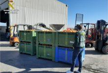 Investiguen a 17 persones a Alacant i València per falsificar la venda de 72 tones de taronges