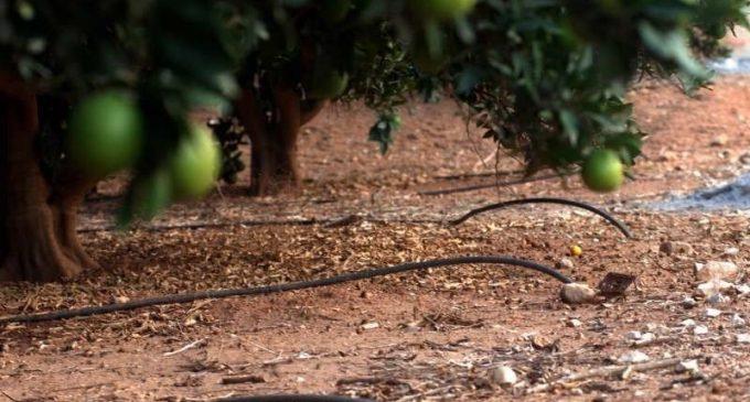 Agricultura destina 450.000 euros en ajudes per al foment de la innovació tecnològica a través de finques o explotacions col·laboradores