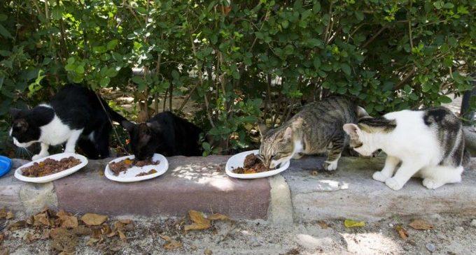 València reparteix més de 9 tones de pinso als col·laboradors de colònies felines
