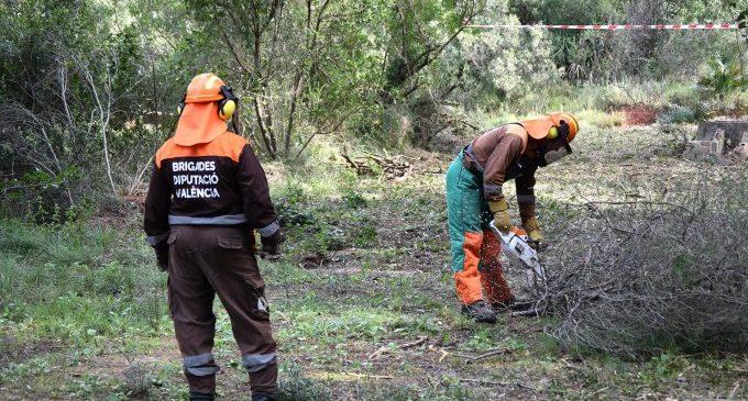 Les brigades forestals de la Diputació reprenen els seus treballs de silvicultura per a prevenir incendis