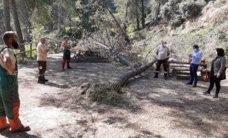 Sayo Gandia i Joan Sanchis visiten les obres de neteja forestal a la zona de Galindo