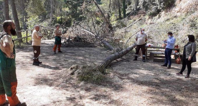 Sayo Gandia y Joan Sanchis visitan las obras de limpieza forestal a la zona de Galindo