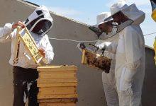 L'Ajuntament de València desenvolupa una estratègia d'apicultura urbana amb la instal·lació de més d'una vintena de ruscos en la ciutat