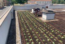 Se instala una cubierta ajardinada en el centro de mayores de Benicalap