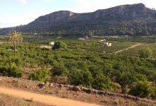 El Ayuntamiento de Alzira pide a la ciudadanía mucha precaución para prevenir los incendios forestales
