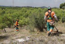 Paterna duplica hasta los 30 metros las franjas de seguridad forestal para prevenir incendios