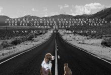 La Protectora d'Animals de Burjassot alerta contra el drama de l'abandó animal a l'estiu