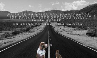 La Protectora de Animales de Burjassot alerta contra el drama del abandono animal en verano