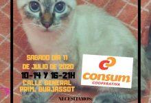 La Societat Protectora d'Animals de Burjassot celebra una recollida solidària per als animals abandonats