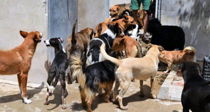 """Daniela Pilló, presidenta d'AUPA: """"El confinament ha provocat un augment del maltractament i acarnissament sobre els animals abandonats"""""""