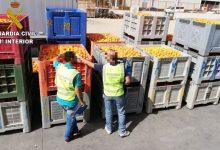 Detenida una persona e investigadas otras 45 por el hurto de 41.000 kg de naranjas en La Ribera