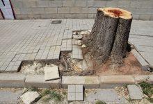 Tala d'arbres per a rehabilitar el carrer de les Rotgeres
