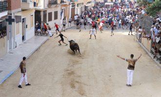 Comissions taurines i Ajuntament de Puçol acorden suspendre tots els «bous al carrer» de 2020
