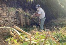 51 personas limpian los barrancos de Alzira gracias a una subvención de más de 220.000€ del Estado