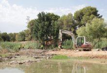 Paterna elimina les espècies invasores en el llit del riu Túria i La Vallesa