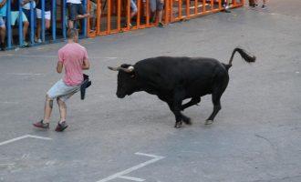"""Ramaders de Bous al Carrer protesten aquest dimarts a València per a """"evitar el sacrifici de més animals"""""""