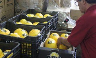 Empieza la venta del Melón de Oro de Ontinyent en los comercios locales