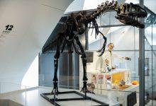 El Museu de les Ciències celebra el seu vint aniversari amb l'exposició '20 amb tu,contigo, with you'