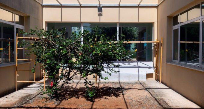 Conclouen les obres de millora del Centre Municipal d'Avifauna de Natzaret