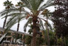 Durant l'estiu s'han fet més de 4.000 actuacions en els jardins de València