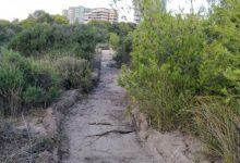 Comença la instal·lació d'una nova passarel·la de fusta a la Devesa per accedir a la platja de la Garrofera