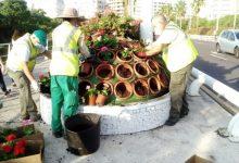S'erradica dues plagues que afectaven la vegetació del Pont de les Flors de València