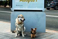«Connexió animal», la nova campanya que fomenta l'adopció a la ciutat de València