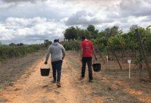 L'Escola de Viticultura de Requena augmenta un 15% el seu alumnat i reforça la protecció contra la Covid